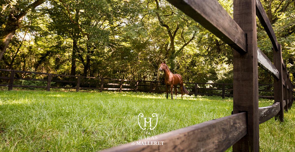 Dressage Horses Haras de Malleret